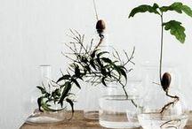 water plant / by Ryo Ozawa