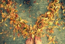 Autumn / by Mary Lou