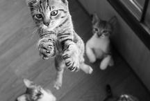 meow. / by Rachel Bailey