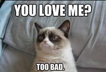 ~~~Grumpy Cat / by Creations by Mrs. Mouse (Melissa Mize)