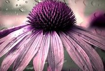 Beautiful flowers / by Tamara van Schaik