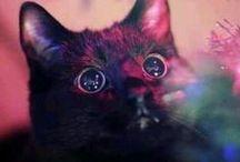 Here kitty kitty / by Doroty Ellis