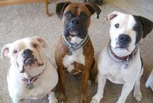 All My Children Have Paws / I have three amazing children: Georgia Mae (American Bulldog), Timber Montgomery (Boxer), & Petey Johnson (American Bulldog) / by Bri Poorman