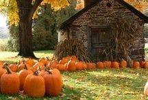 Autumn / by Kathleen Boehmig