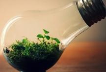 Ecology and Recycling / by Shantal de la Serna