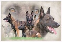 German Shepherds / by Chaplain Debbie Mitchell