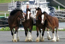 A Horse is a horse, of course, of course...... / by Chaplain Debbie Mitchell