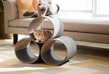 kitty stuff :) / by Linsy Hagen