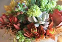 Fresh Florals / by Sonia Spotts