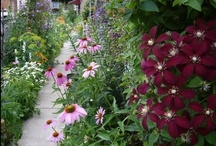 Garden: plants / by Erika Brandlhoffer