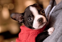 Cute Pets / They are so adorable! So cute! How to be indifferent to them? Impossible! / by Ana Gracez