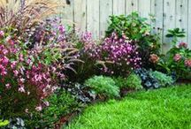 All Things Gardening / Gardening, Gardens, Veggies, Plants, Trees, Flowers / by Jennifer L.S. Weber {All Things Jennifer}