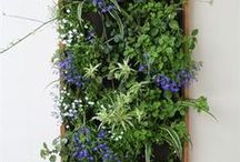 Vertical Gardens / by Arbor and Vine