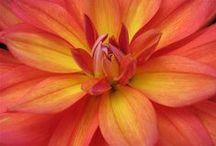 Flower Power / by Kristin Keller