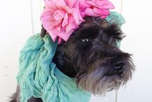 Cece's Board / If my pooch had a Pinterest. Here's what'd be on it☺️ / by Julie Graham