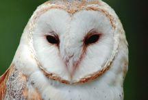 Owls! / by Caitlin Barnes