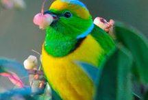 Birds / by Rita Cassidy
