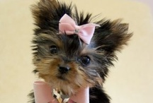 Cuteness!  :D / Ridiculously cute... / by Tracy Rice
