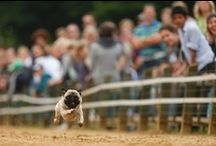 Pugs & Bostons / by Alice