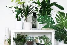 || GREEN THUMB || / by Christine O'Connell