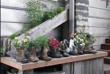 gardening / by Bette Freddy