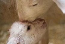 Animals....love them ALL....great and small. / by Karen Lambert