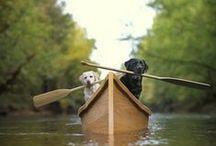 Dogs ~ Man's Best Friend. / by Karen Lambert