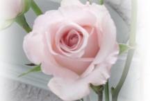 Romantic Roses / by Rachelle Vaughn