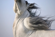 Equintatious / Everything sitting from the perspective of a horse looks good! / by Diane Bray
