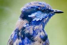 Stunning Birds / by Rachelle Vaughn