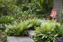 Garden inspirations / by Caroline Lawton