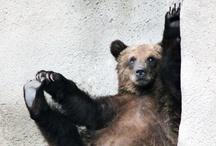 bears / make me roar! / by Natalis Mazgalis