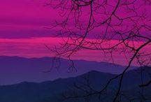 Purple Passion / by Patty Vogl