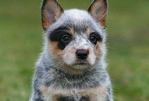 Animals/ Pets / by Taylor Warlick