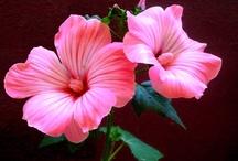 Flores / Flores hermosas / by Inés Aguado García