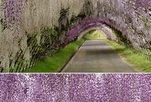 Purple / by Jessica Ellis