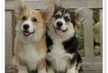Corgis... and some other cute pups / Dogs / by Lauren Pizzi