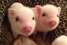Cuties! / by Sarah Gray