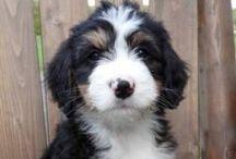 Another dog? / by Klerissa Church
