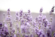 Provence mon amour / by ♡Desi♡