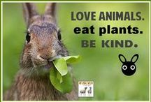 """Fight For Animal Rights / """"Now I can look at you in peace; I don't eat you any more."""" ~Franz Kafka """"Life is as dear to a mute creature as it is to man."""" ~The Dalai Lama """"The question is not, Can they reason or Can they talk? but, Can they suffer?"""" ~Jeremy Bentham """"The cattle of the rich steal the bread of the poor."""" ~Mohandas Gandhi """"Our task must be to free ourselves...by widening our circle of compassion to embrace all living creatures and the whole of nature and its beauty."""" ~Albert Einstein  / by Joan Early"""
