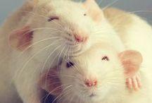 Little Bitty Ratty Tat Tats / by Christine Garity