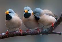 Birdies / by Christine Garity