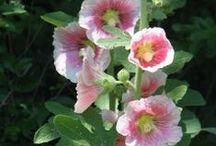 Gardening - FLOWERS / by Janice Lawson