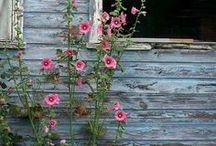 BLUEBIRD cottage ~ / by Janice Lawson