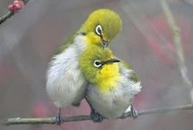 Fine Feathered Friends / by Nancy Pate