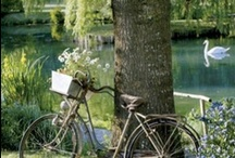 biking / by Fatmahan Kıral