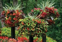 Awesome Gardens / by Nancy Pate