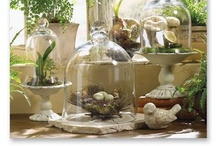 Cloche Domes, Apothecary Jars, Etc. / by Nancy Pate