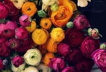 Flowers, Succulents & Gardens / by Stephanie Lackey